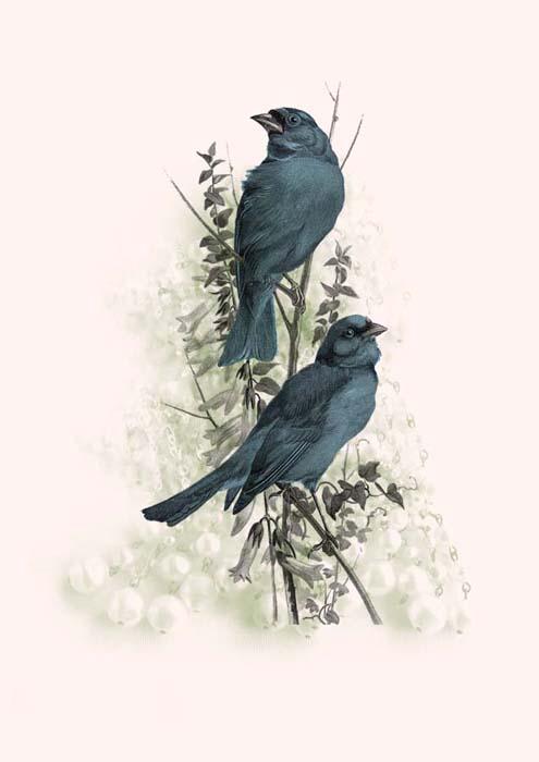 Vintage Blue Birds