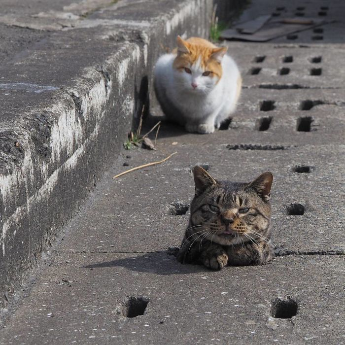 stray-cats-play-drain-pipe-holes-nyan-kichi-japan-2-58d3acee52c2b__700